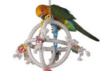 Best Pet Bird Stuff / List of must haves for your pet birds! / by Shayna Nelson