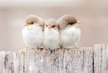 Birds / by Rona Ware