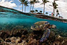 vacation / by Kristy Handke