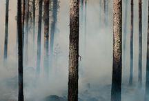 Into the trees / by Nancy Elizabeth