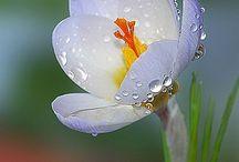 Flores / by Queti J