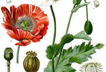 Flower Illustrations / by Susan Lambert Ridder