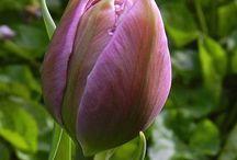 flowers / by Deborah Brock