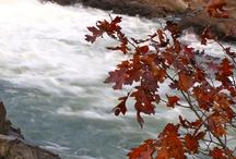 Fall Photos / by ABC7 News WJLA