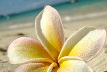 Hawaii Bound  (^_~)* / by Annie