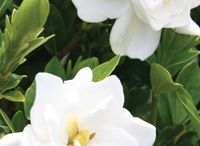 Easy Care Plants We Love / by Southern Living Plant Collection