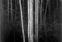 Ansel Adams / by Peter Chien