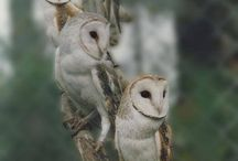 Owls / by Snail-mail Shop