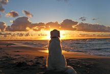 I Love Dogs =) / by Jeri Prybell