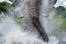 Elephants / by Joan Ciccarone