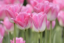 Valentines / by Floret Flower Farm