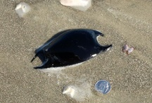 Seaside Scavenger Hunt / by Rosanna LaBonte