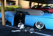 Classic Cars & The Count and Counting Cars / by Beth Bloomberg