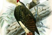 Aves del Paraguay (Grabados del siglo XIX) / by Sebastián Scavone
