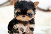 Pets ~ / Cute / by Toni Dunaway