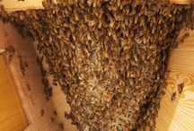 Beekeeping / by Molly Green