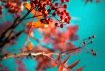 color schemes / by Hope Davis