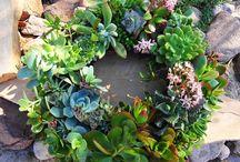 Gardening / by Melissa Etto