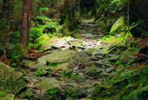 Hiking / by Yildiz Janek