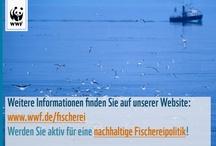 Mythen & Fakten zur Fischerei / Jede Woche bekommen wir von Politik und Industrie die tollsten Geschichten über die Folgen einer nachhaltigen Fischerei erzählt. Jetzt ist damit Schluss! Wir räumen mit den Mythen auf und präsentieren die Fakten!   Jetzt die Petition für nachhaltige Fischerei unterzeichnen: www.schwarm.wwf.de ! / by WWF Deutschland