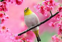 birds / by Gloria Washington