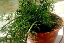 gardening indoors / by Janet Boyes
