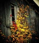 Old Barns  / by Robin Spencer