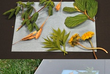 Art Projects / by Currier Museum