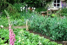 A Cottage Kitchen Garden / by Buttercup Meadow