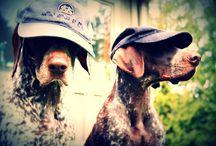 My puppies / by Jody Moose Stewart
