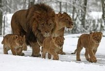 Family  / by Si MoNe