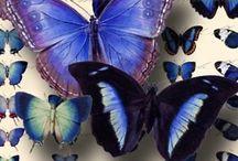 Butterflies }!{ / by Kelly Jones