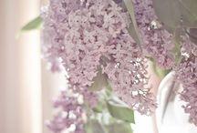 Seasonal Inspiration: Spring / by Kathleen Elizabeth