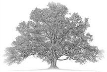 Genealogy Stuff / by Teresa Bernard