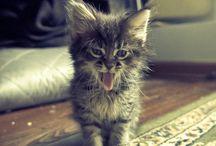 Kittens / by Erica McIntyre