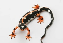 綺麗な爬虫類 Reptiles / by Junko Momota