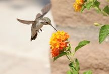 Butterfly Garden / by Kathryne Lee