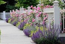 Gardening Ideas / by Teri Hankins