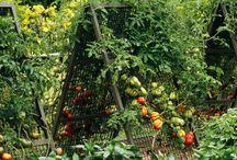 Garden / by Jurate Phillips