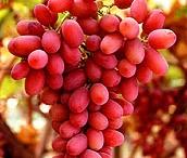 Frutas / by Solange Maciel Branco