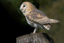 Birds / Photos of birds / by Northern Ireland Environment Agency