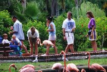 Florida fun / by Heather Maynard