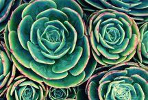 petal pushers / flowers. flowers. flowers. / by jennifer davis