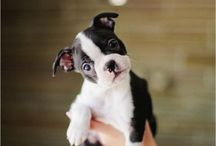 Cute puppies / Doggies! / by Brittany of www.BrillianceOfB.com