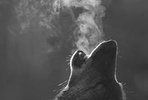 Animals / by Savannah English