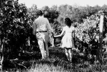 Summer {Finger Lakes Wine Country} / by Finger Lakes WineCountry