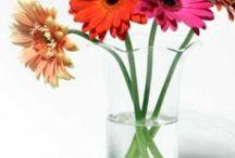 favorite flowers / by Tanya Seabaugh