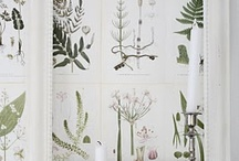 Plants & Botanicals  / by Tiffany Grant-Riley /Curate & Display/