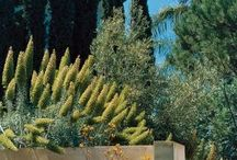 Gardens + Patios + Courtyards + Pools. / by Nelly Camacho-Greene