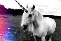 Unicorns / by Noralie Alaerts
